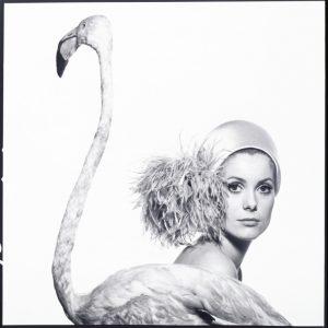David Bailey, Catherine Deneuve con un fenicottero, 1968