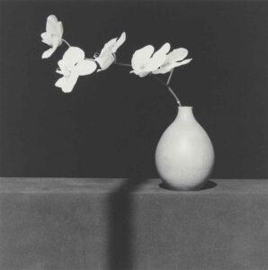 Robert Mapplethorpe, Orchidea, 1982